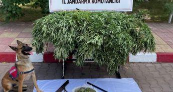 Malatya'da uyuşturucu kaçakçılığına geçit yok