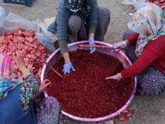 Nar ekşisi Malatyalı kadınların ek gelir kapısı oldu